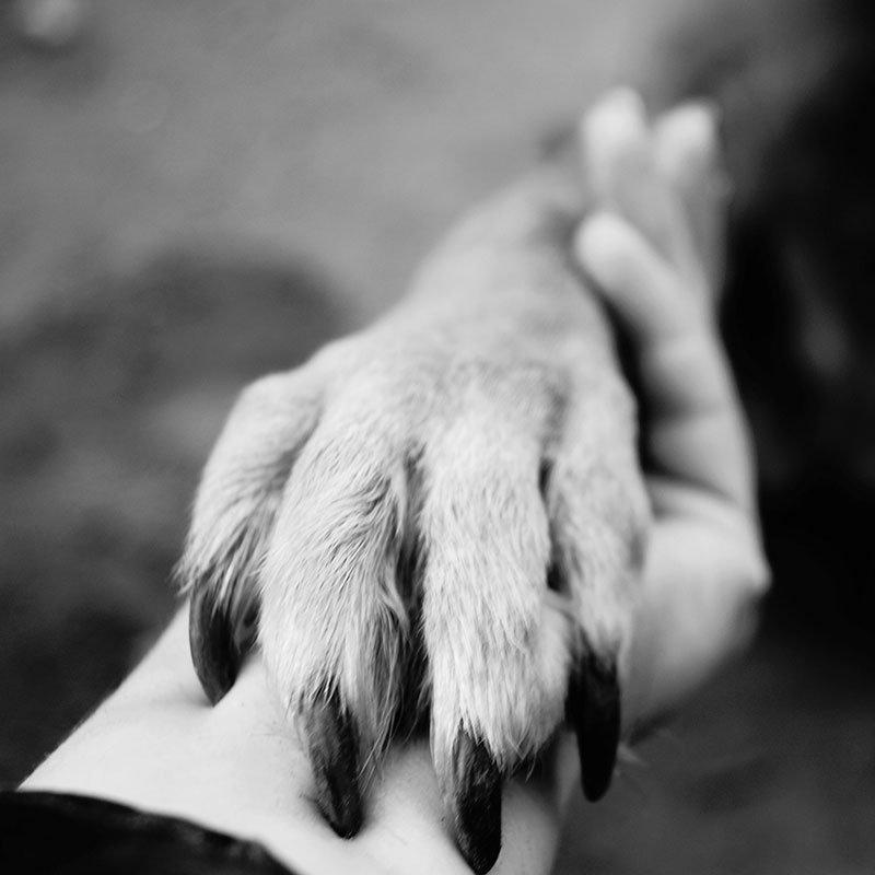 hand-paw